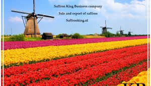 Verkaufen Sie ein Kilo Safran in Niederlande