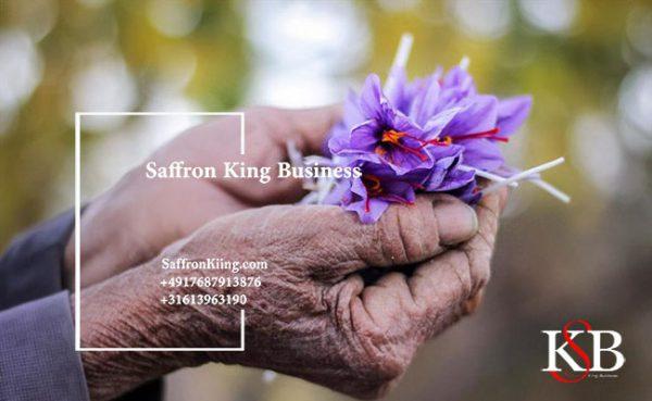 Saffron harvest - that's why saffron is expensive