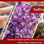 Verkäufer des besten reinen Safrans